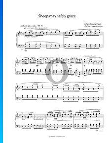 Schafe Können Sicher Weiden, BWV 208